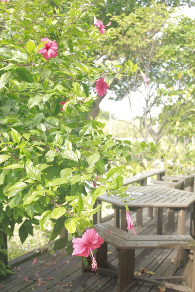 黒島の民宿「みやた荘」のテラス